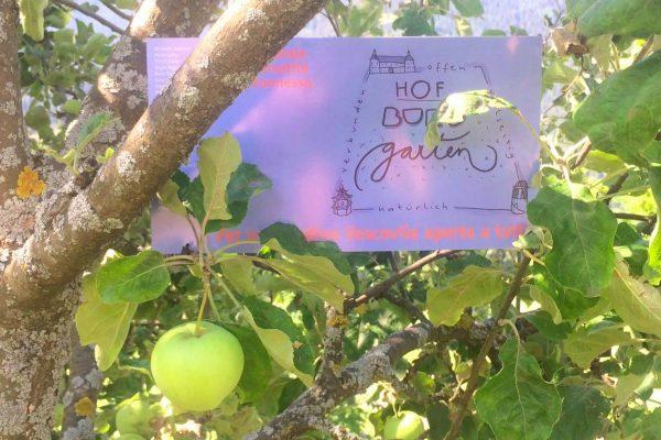 Antwort von Gerold Siller auf den Offenen Brief zum Hofburggartenprojekt